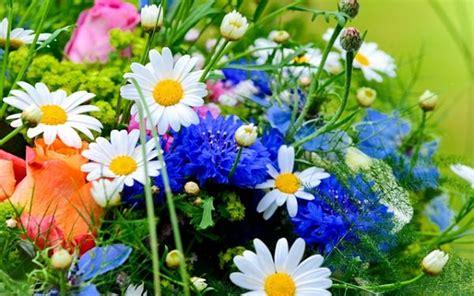 aforismi sui fiori frasi citazioni e aforismi sui fiori aforisticamente