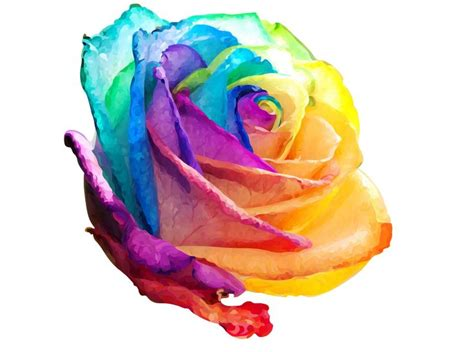 rainbow rose tattoo 174 best images about tattoos on finger