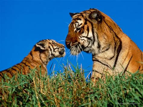 wild animals of the for your desktop wild animals high resolution stock images