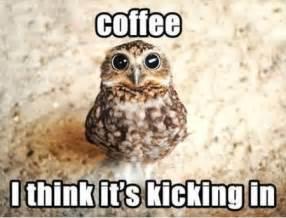 Too Much Coffee Meme - adventures in recruiting x panera bread 187 buckeyes blog