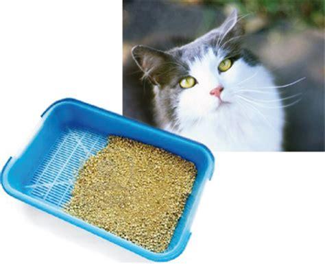 ossalato di calcio alimenti da evitare alimentazione gatto con problemi alle vie urinarie
