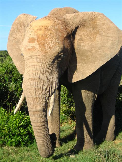 Think Elephants International: Spot the Difference ...