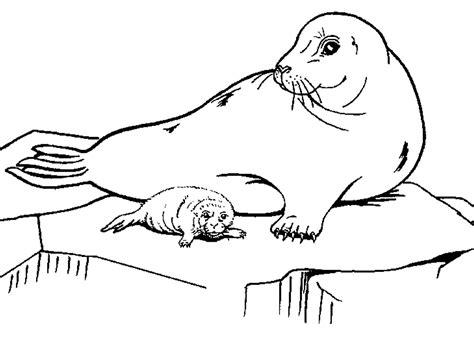 раскраски животных арктики и антарктики скачать