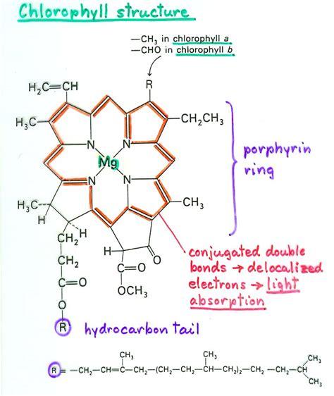 chlorophyll diagram photosynthesis