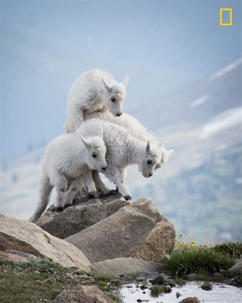 National Geographic Wildlife 2017 national geographic nature photographer of the year