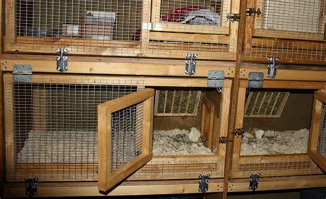 stall kaninchen ein stall f 252 r kaninchen