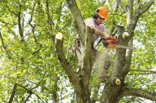 houston tree trimming and cutting services lanzas tree