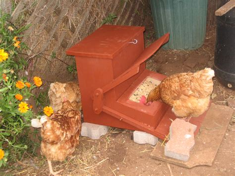 Tempat Pakan Burung Otomatis membuat tempat pakan otomatis untuk ayam dan unggas om kicau