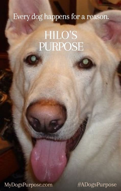 a s purpose quotes best 25 a dogs purpose ideas on january 27 quotes and