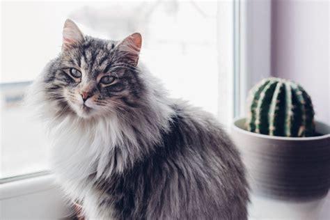 come fare testamento senza notaio includere il gatto nel nostro testamento e lasciargli un
