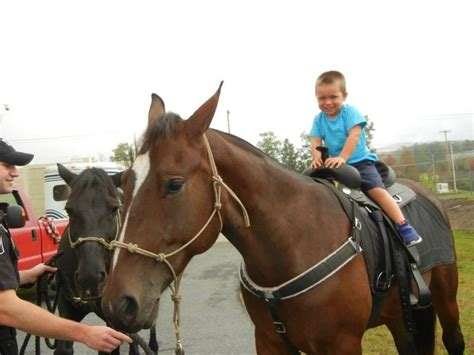 Lackawanna County Sheriff S Office by The Horses Of The Lackawanna County Sheriff S Office