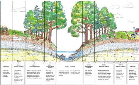 Landscape Buffer Definition The World S Catalog Of Ideas