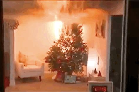 safety hazards of christmas trees both real and fake