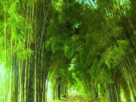 wallpaper daun bambu 50 tempat wisata di surabaya yang paling hits reservasi