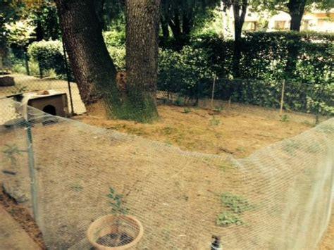 come costruire una gabbia per conigli nani recinti esterni per conigli altri animali