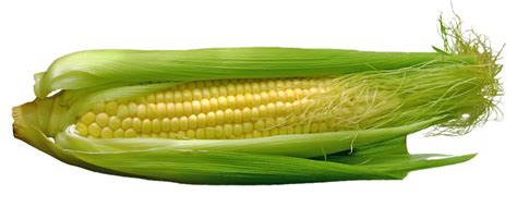 Sow sweetcorn now   News   Stansted Park Garden Centre