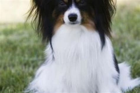 most trainable dogs trainable dogs breeds images