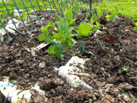 How To Make Paper Mulch - archives for 04 2010
