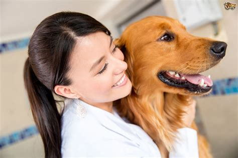 do g 10 questions owners should ask vets pets4homes