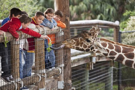 american zoo a sociological safari books an inclusive environment zoo wide autism books