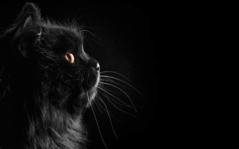 wallpaper cat illustration wallpapers black cat wallpaper cave