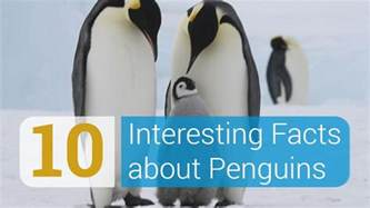 penguin facts for exciting facts about penguins facts about animals volume 18 books 10 interesting facts about penguins