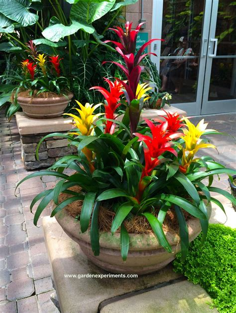 Plant Garden Ideas Ideas For Container Gardens Throughout Best Plants For Tropical Garden Ideas Potted Plant Vava