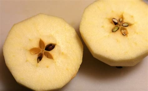 Aple Syar I the story of how the apples got within waldorf