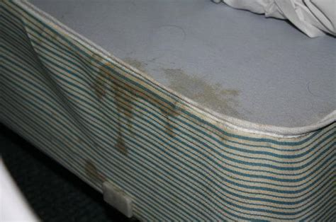 bed bug stains on mattress bed bug picture of econo lodge atlanta airport east