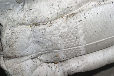 cimice materasso gruppo co a pi impresa di pulizie giardinaggio e pest