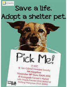 adoption flyer template pet adoption flyer template free quotes