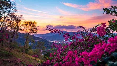 sfondo fiori primaverili primaverili sfondo per desktop fresh sfondi inverno