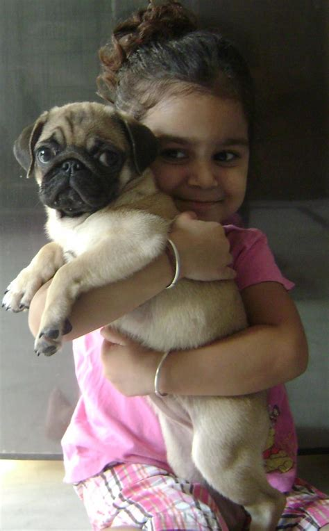 pug prices pug price in india driverlayer search engine