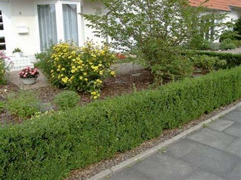 climbing hedge plants 20 green fence designs plants to beautify garden design
