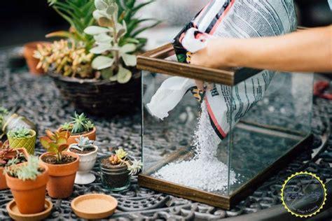 easy diy terrarium    fish tank terrarium diy