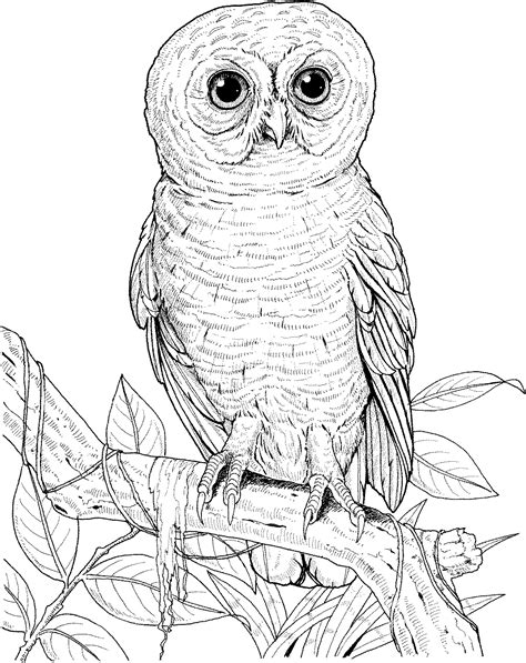 free coloring pages snowy owl free coloring pages of snowy owls
