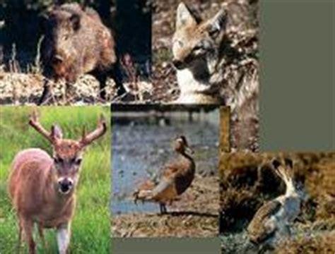 imagenes de animales de zacatecas clima flora y fauna de zacatecas