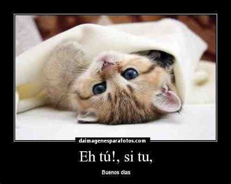 imagenes de gatitos tiernos de buenos dias lindos gatitos con frases lindas de buenos dias en