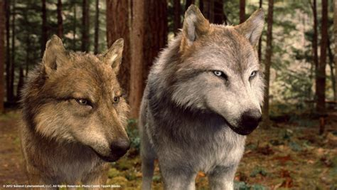 Saga Of The Wolf twilight vires and wolves foto 2017