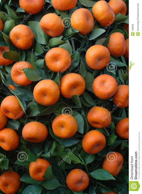 new year oranges with leaves new year fruit tangerines royalty free stock