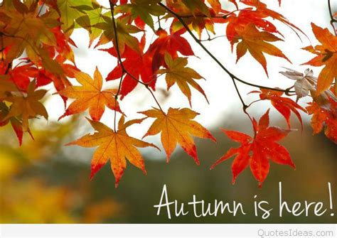 autumn is here wallpaper autumn is here saying image