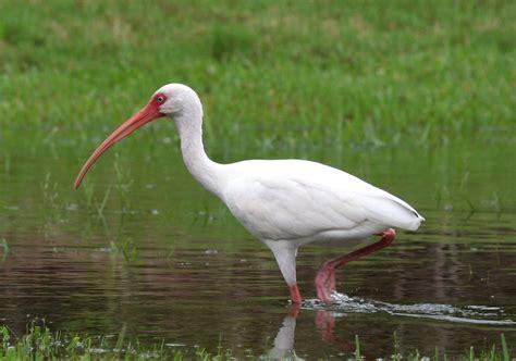 sw boat tours orlando fl white ibis