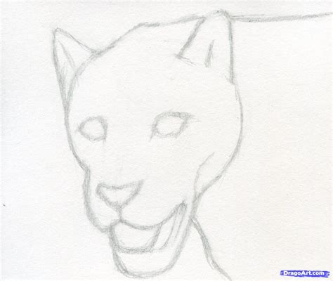 tutorial menggambar macan menggambar sketsa
