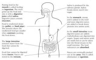 ks3 digestion images frompo 1