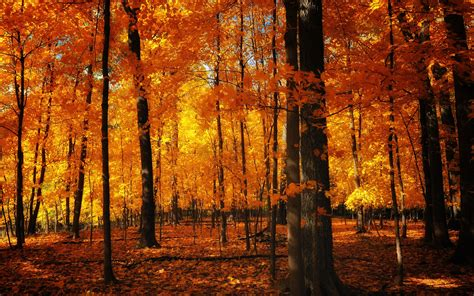 the autumn of the autumn autumn autumn