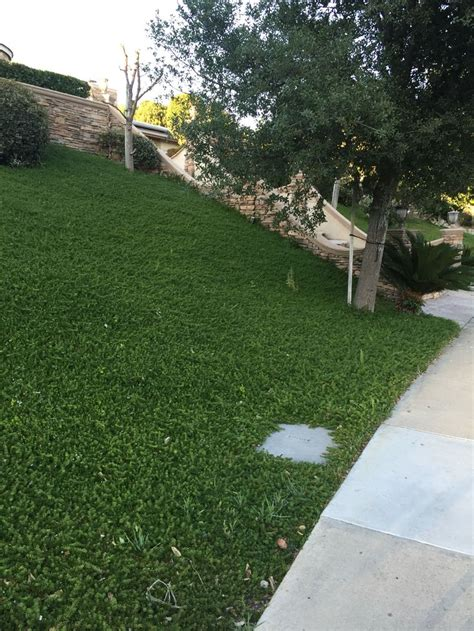backyard ground cover options 27 best ground cover images on pinterest garden ideas