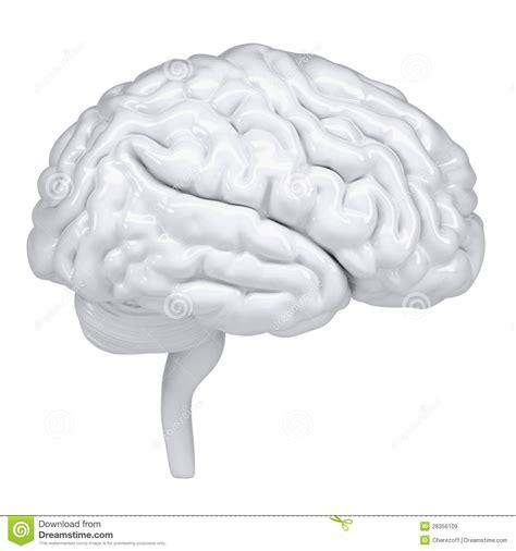 imagenes libres cerebro cerebro humano blanco 3d una vista lateral im 225 genes de
