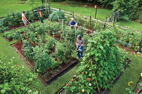 start your own vegetable garden plant vegetable in your back yard southern living