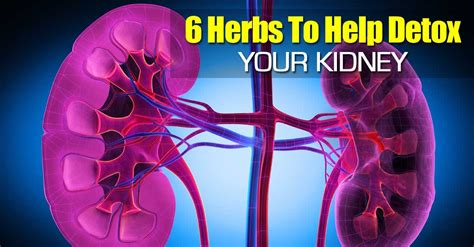 Herbs To Detox Your Kidneys by 6 Herbs To Help Detox Your Kidney