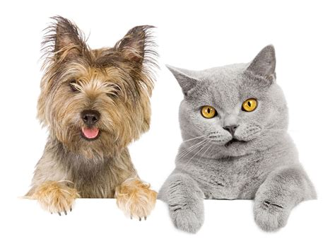 pound puppies and kittens rehoming of cats and dogs in the pound burdekin shire council